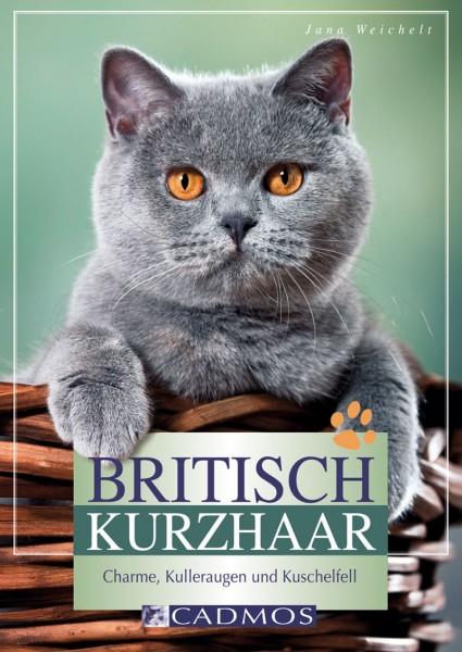 Britisch Kurzhaar