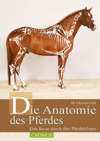 Die Anatomie des Pferdes