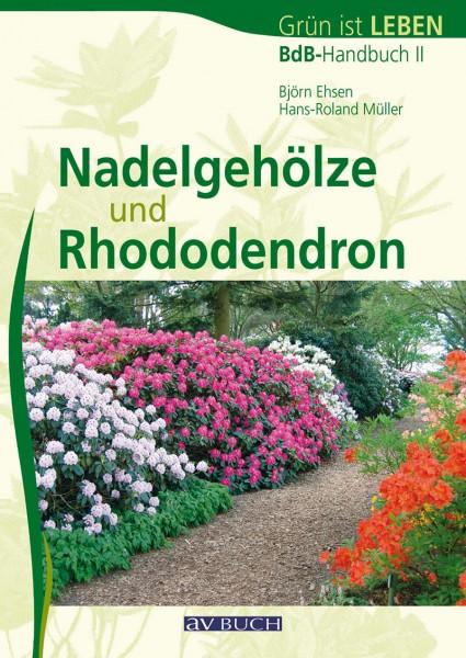 Nadelgehölze und Rhododendron