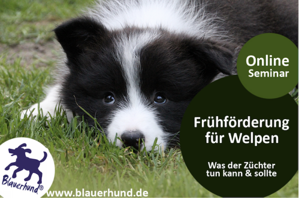 Fruehfoerderung_fuer_Welpen