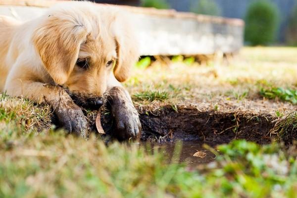 puppy-5413165_rachyt73_pixabay